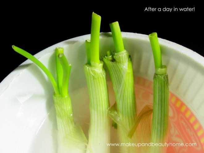growing green onions in water