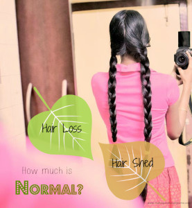Are You Shedding or Losing Hair? – How Many Strands of Hair Loss Per Day is Normal ? : My Views